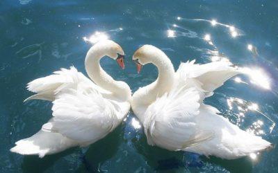 Nisargadatta Maharaj: Love is the purpose of duality