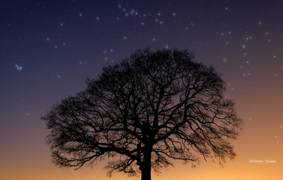 Sunset Tree Pleiades Zen