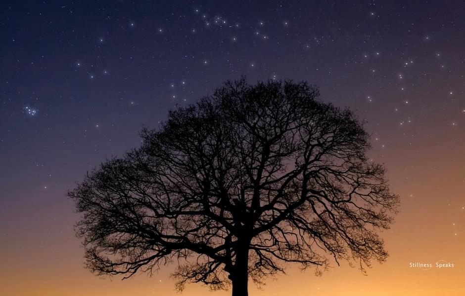 Sunset Tree Pleiades Zen