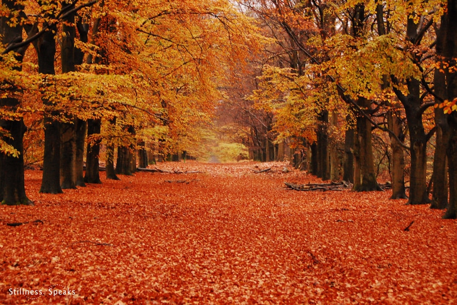 beauty of here autum