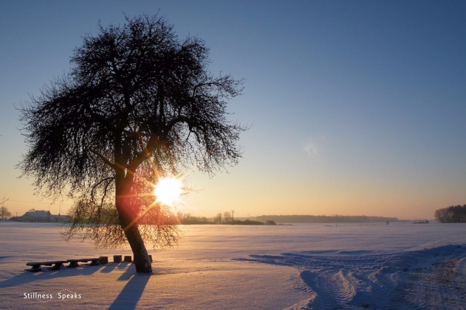 Here / Now, groundless ground, True Nature.