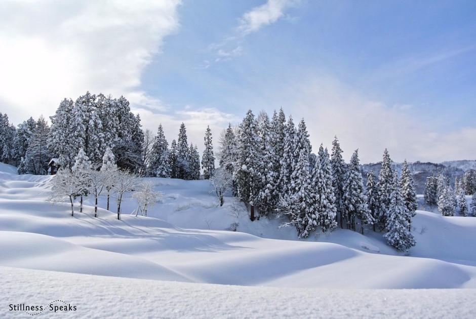 Snow cold dogen