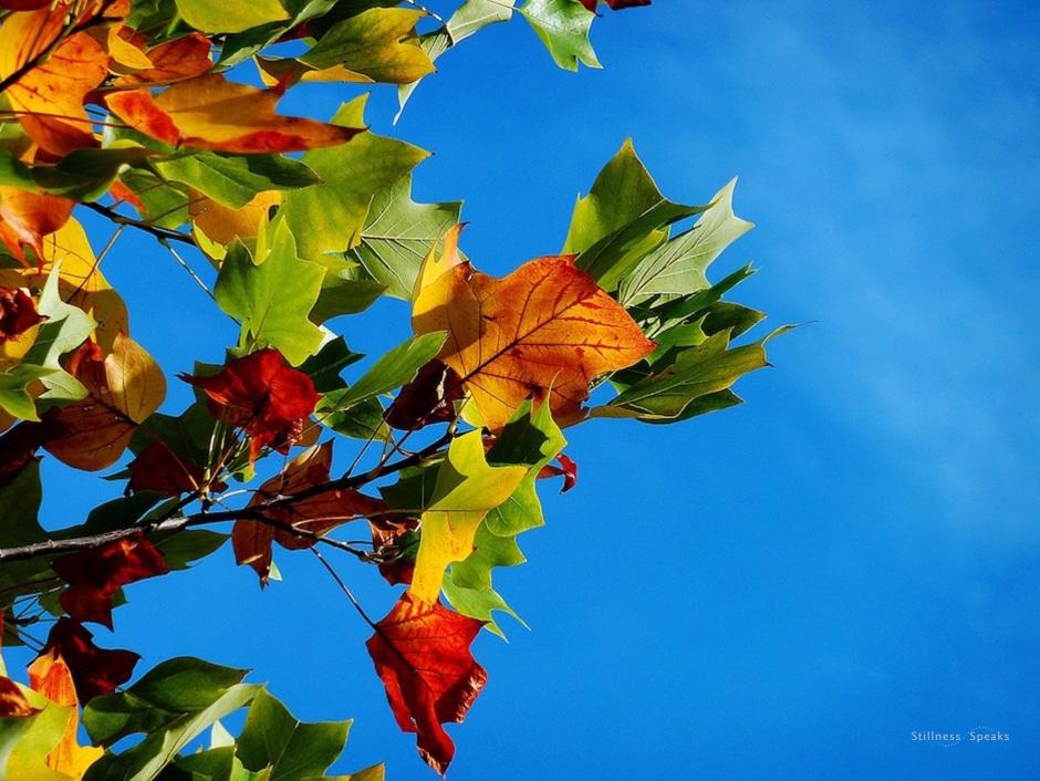 senses, leaves