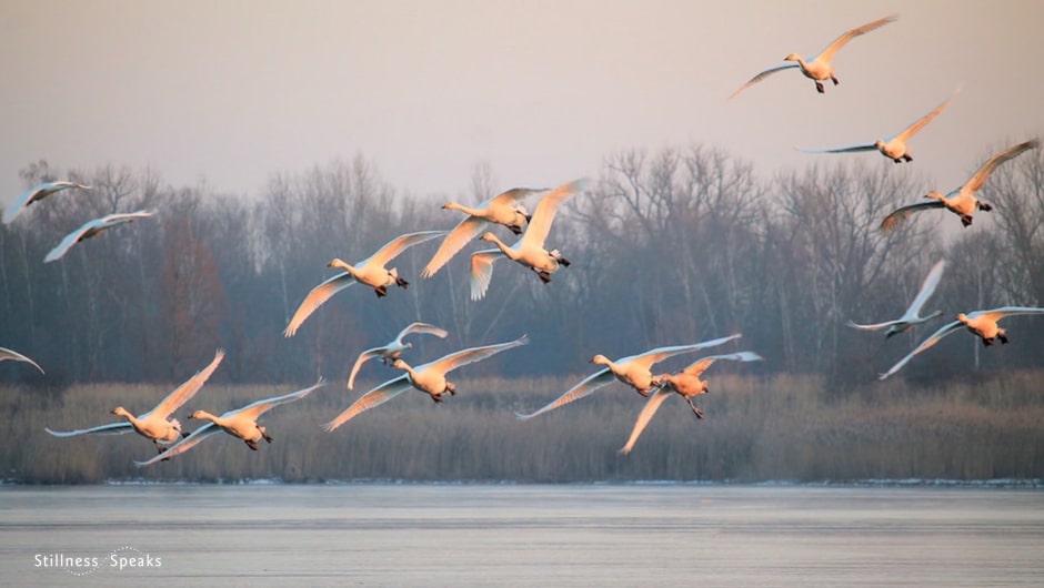 birds, awareness, simplicity