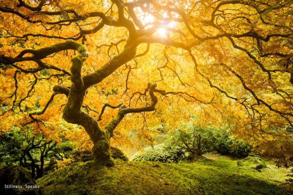 non-dualism, zen, awakening
