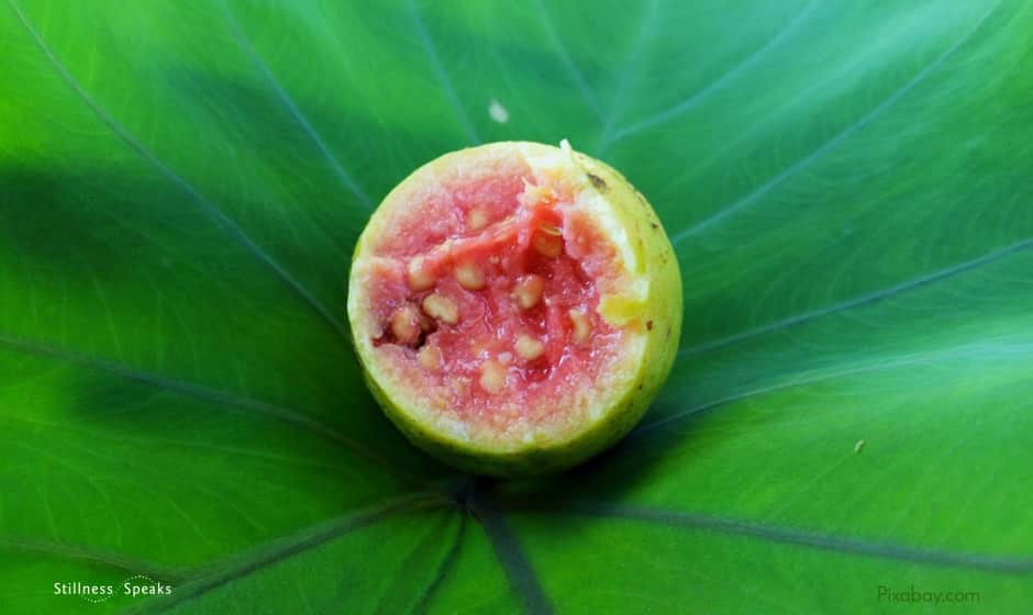 meditation, guava, nature