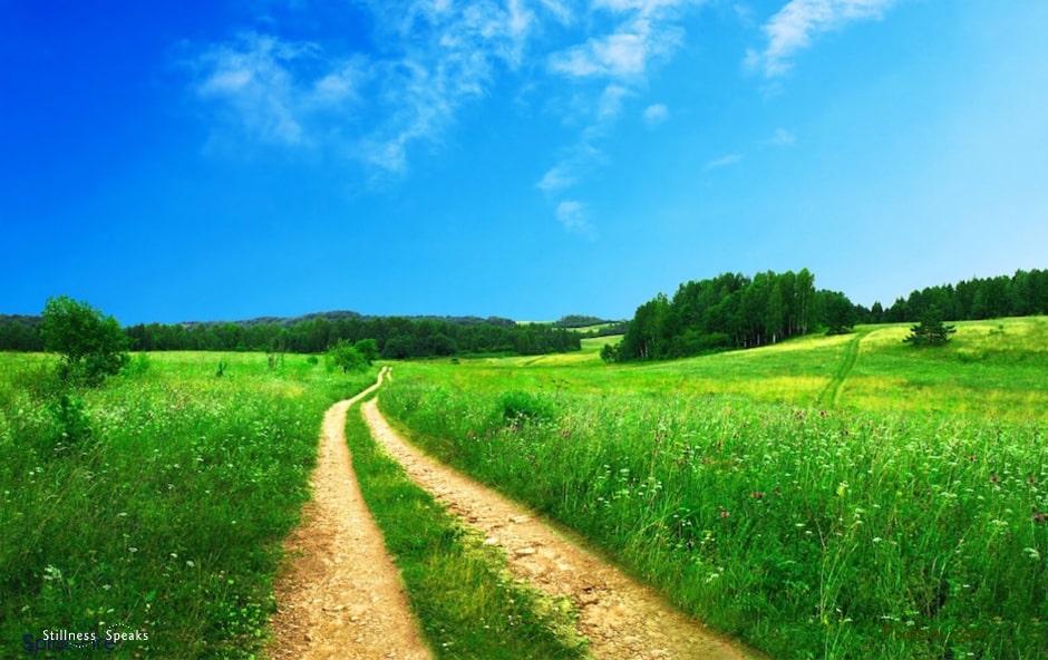 Deep grass, awaken, pathway