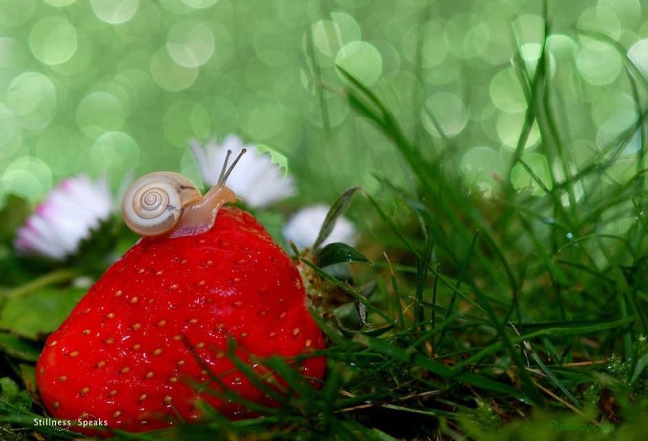 snail, garden, composure