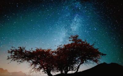 One Bright Pearl: A Conversation About Zen & Awakening