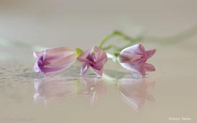 Gangaji: On Knowing … Stillness … Silence