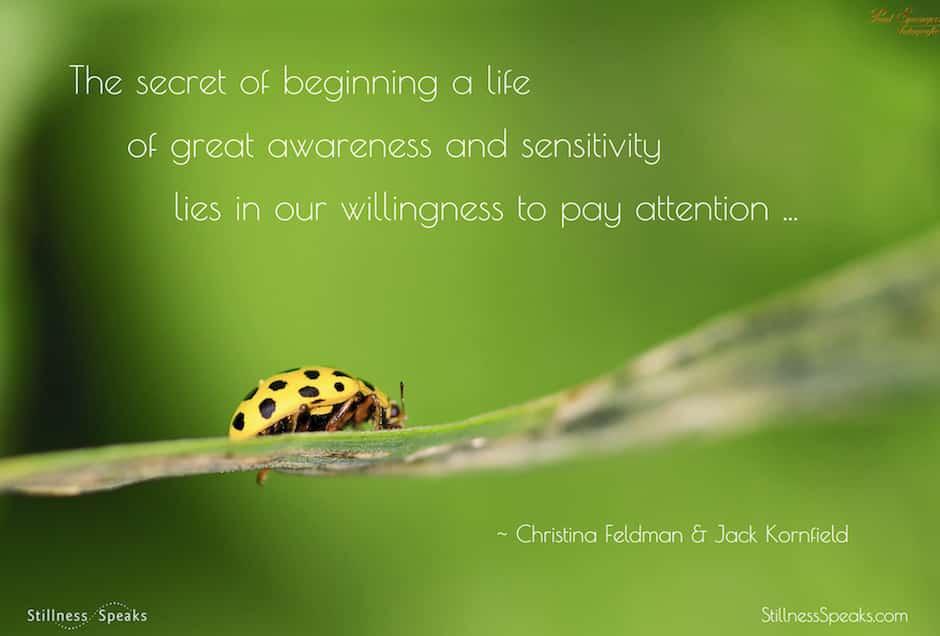 attention, awareness, sensitivity