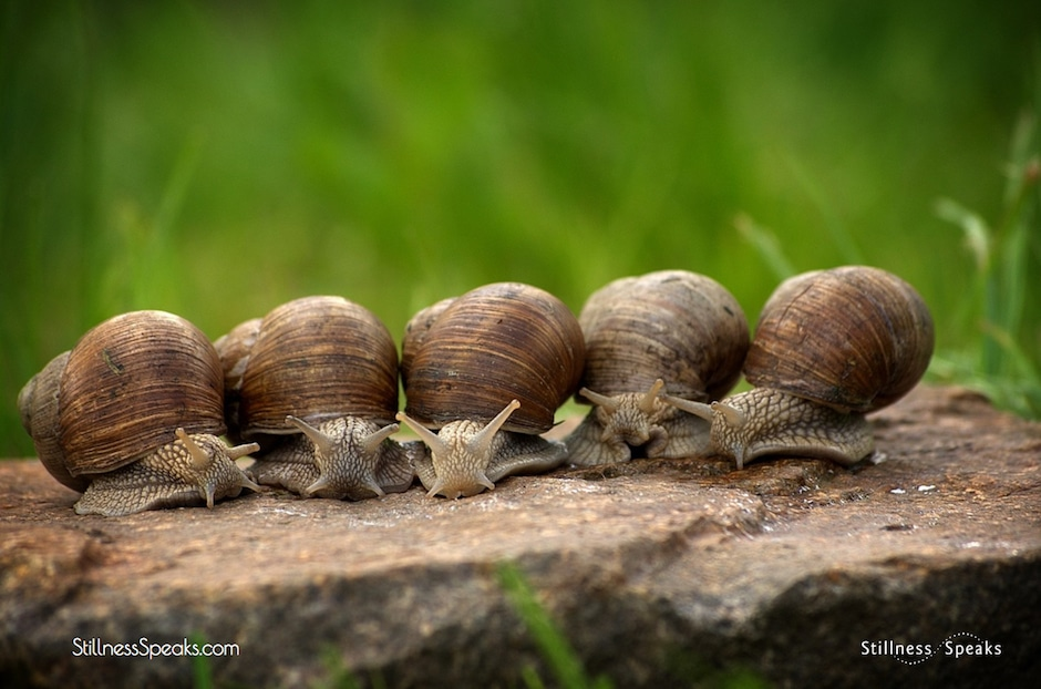 slow, relative speed, snails