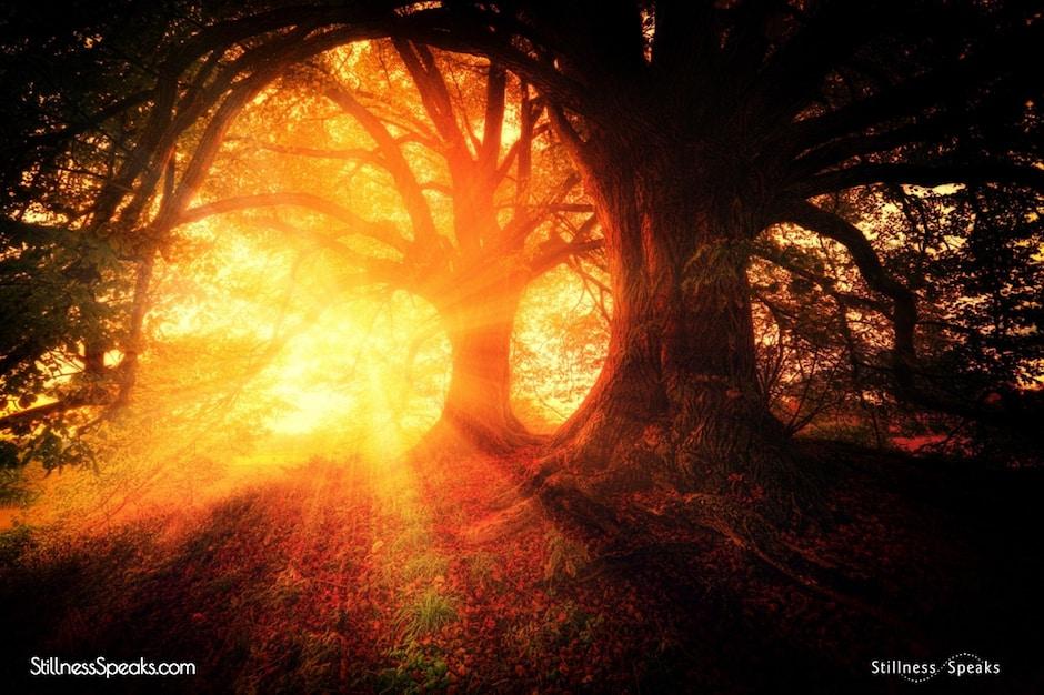 munajat dawn