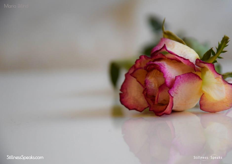 munajat flowers