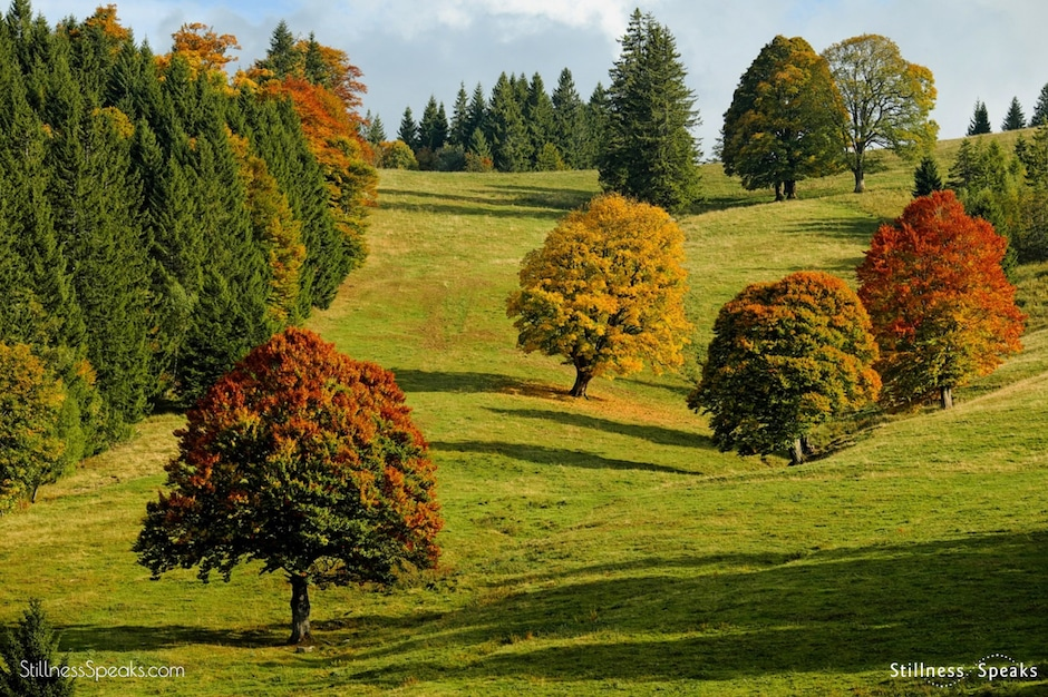 barks autumn forest