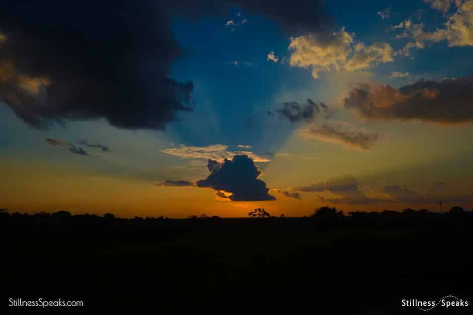 barks sunset sky nothing silence