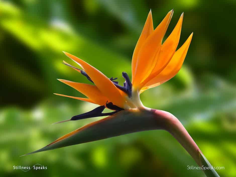 thay flower bloom
