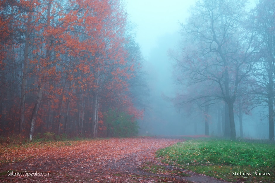trees fog awareness nirmala