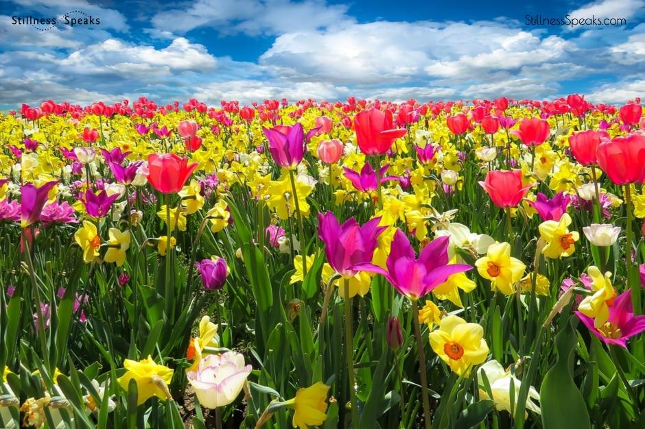 fiel flowers krishnamurti beloved