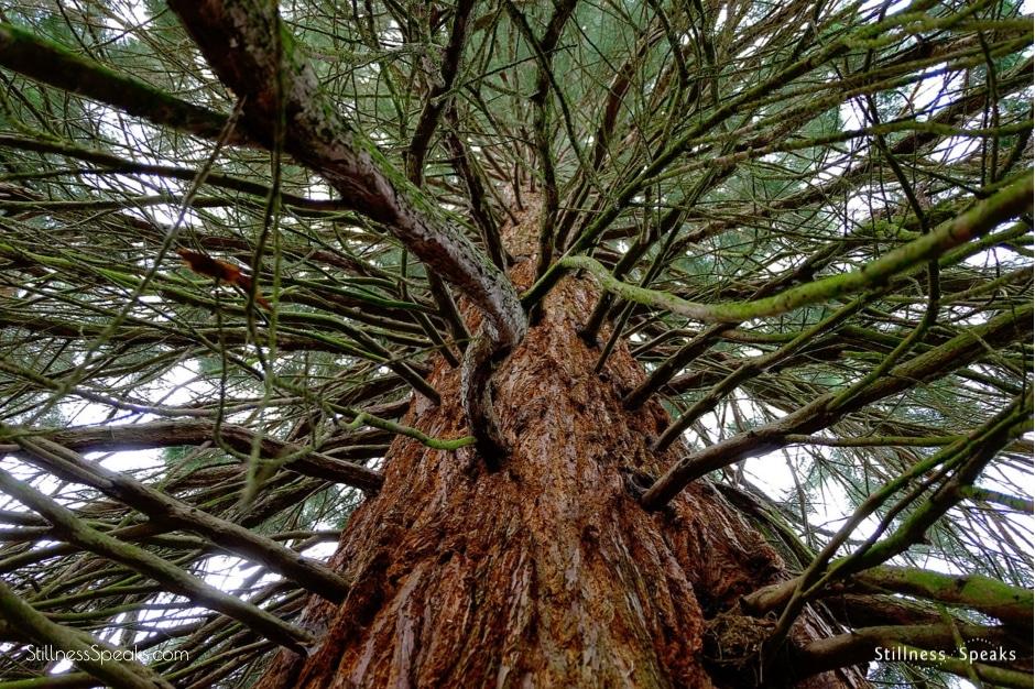tree great age krishnamurti beloved