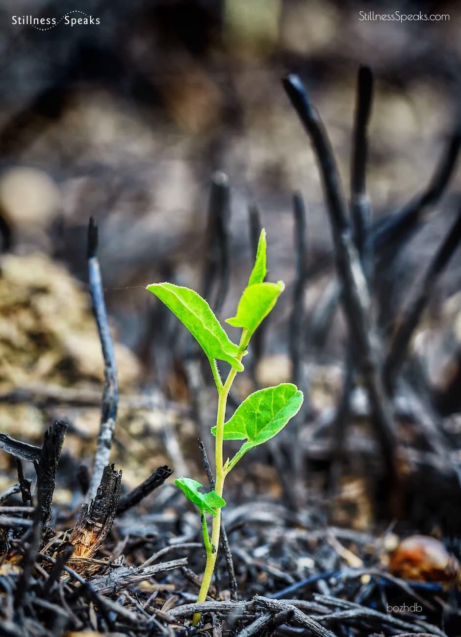 merton plants seed