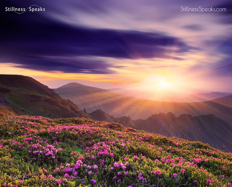merton light spring