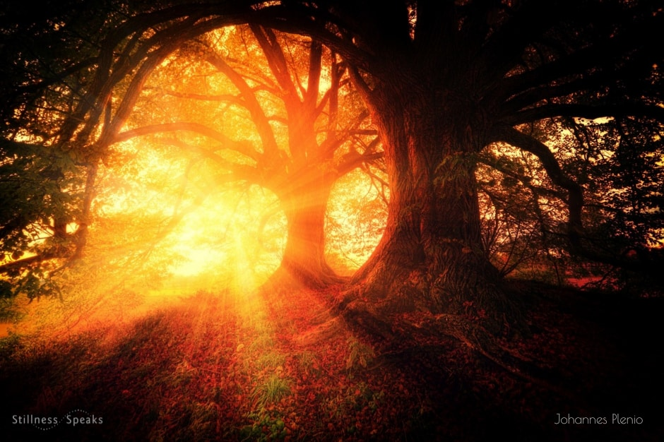 self dawn tree touched sunlight rumi
