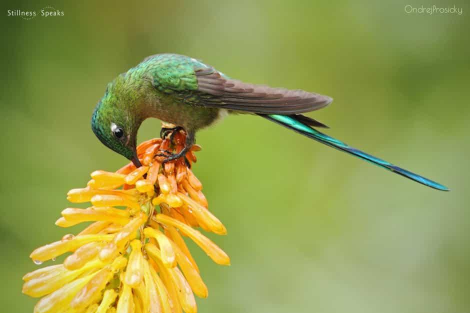 hummingbird eating nectar practice enlightenment shukman
