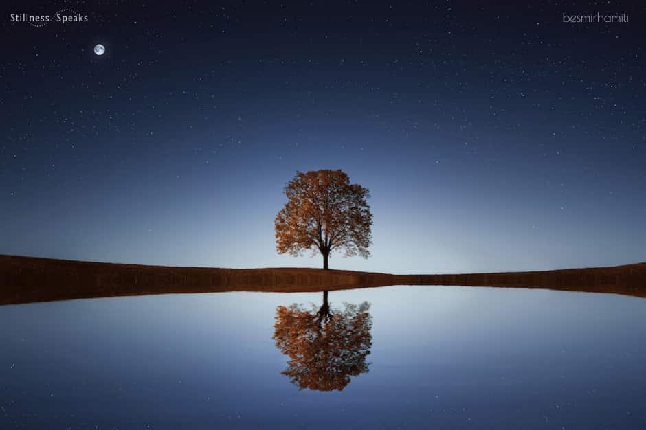 tree reflection practice shadow shukman