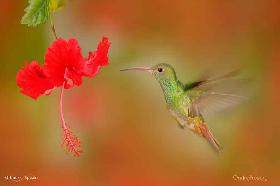 hummingbird right way equanimity lucille