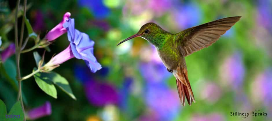 hummingbird this moment tollifson