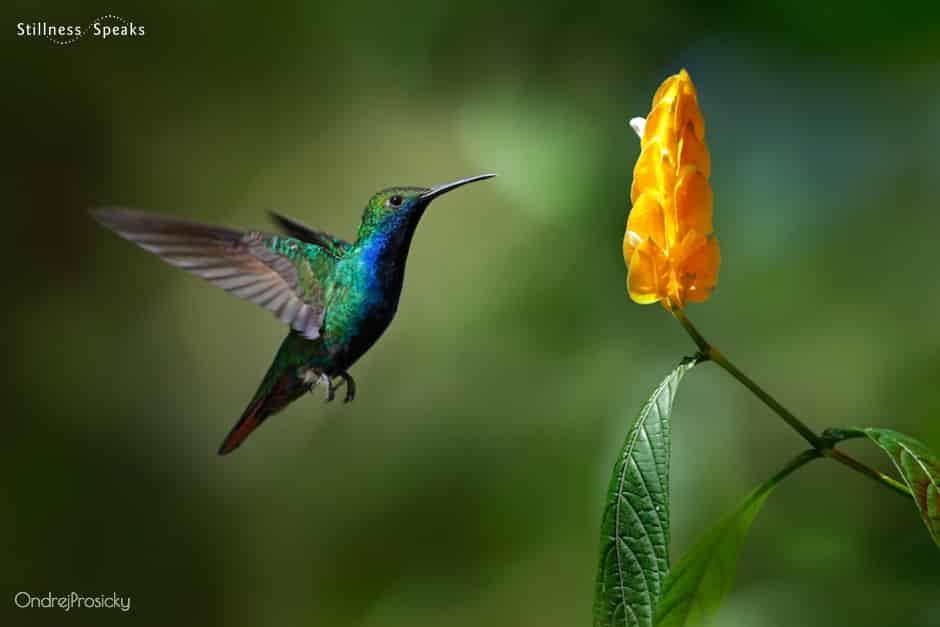 hummingbird light awakening natural world amoda