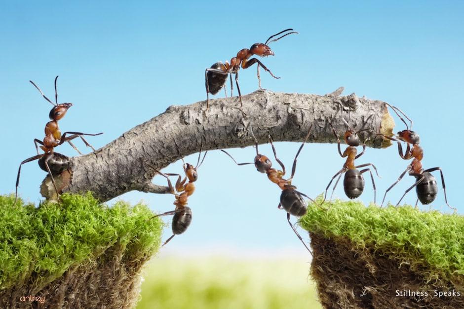 ants teamwork obedience sharing shukman