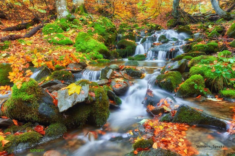 mountain river unbroken wholeness tollifson