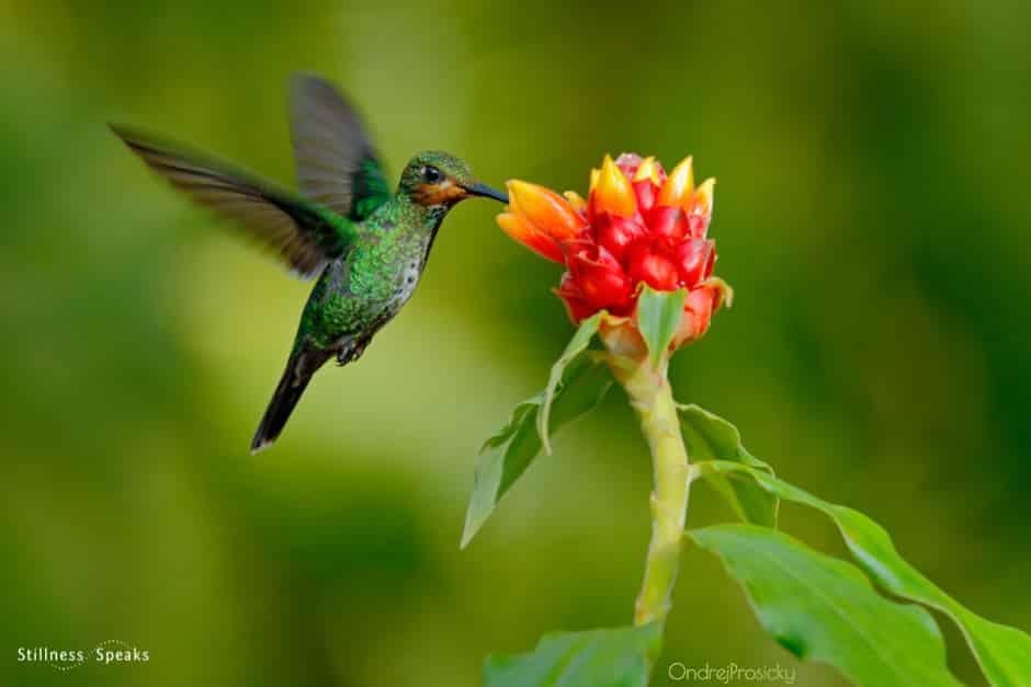 hummingbird mindfulness everything