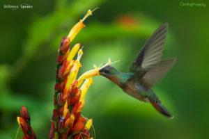 hummingbird choosing what is bays