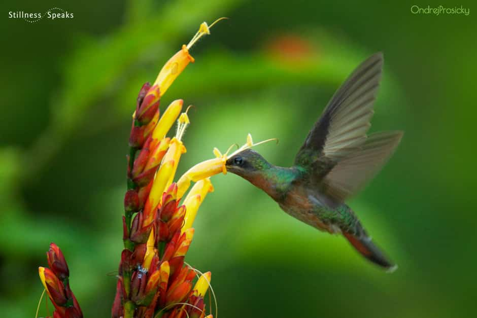 hummingbird choosing what is bays