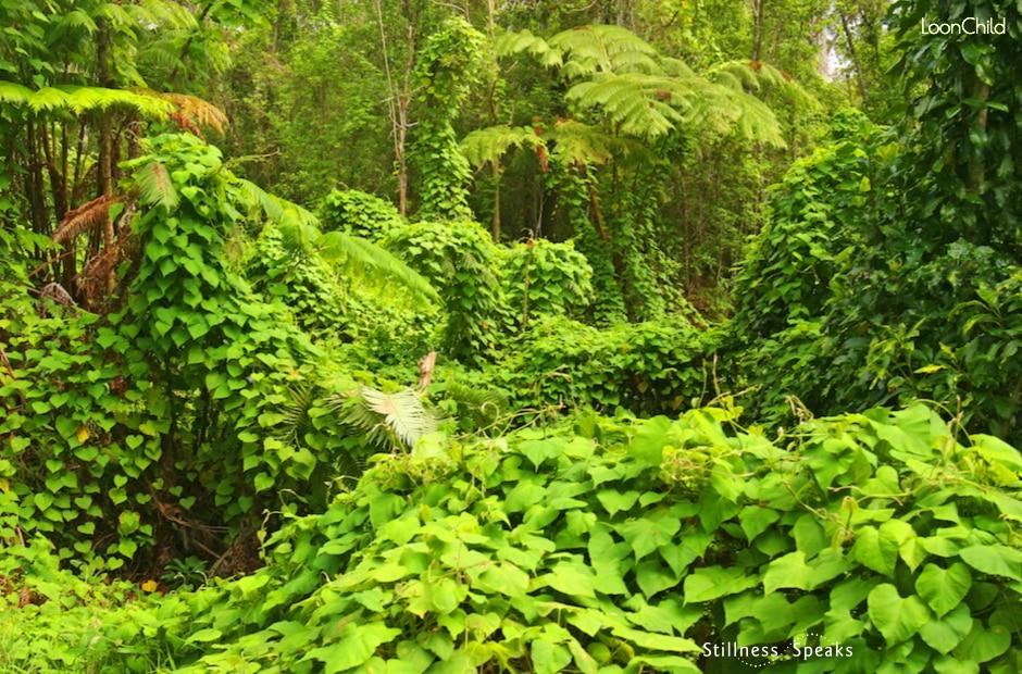 jungle j krishnamurti