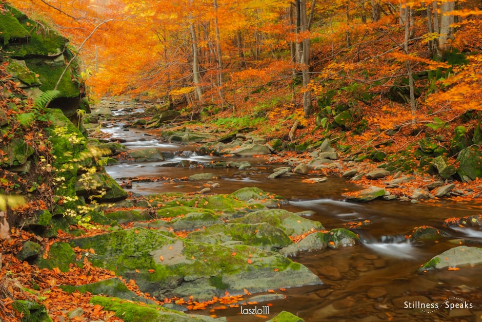 autumn river forest right action