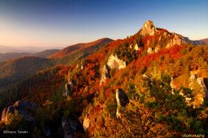 thanksgiving autumn marianites