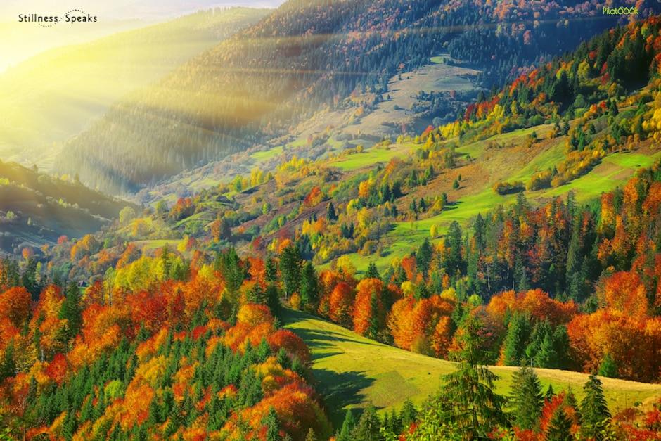 trees hillside beloved community amidon