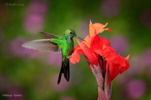 this moment wonders hummingbird thich nhat hanh
