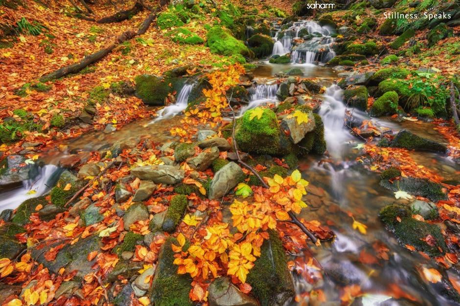 autumn stream wholeness brokenness tollifson