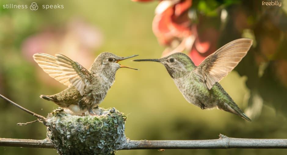 hummingbirds love lao tzu