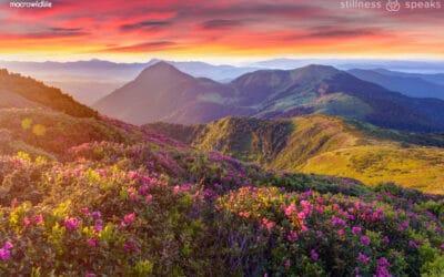 Walking Meditation – Thich Nhat Hanh
