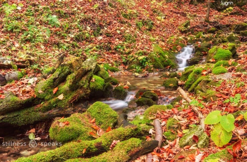 eternal now here adyashanti wild forest