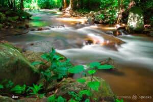 noticing nirmala river forest
