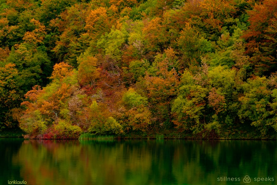 autumn life unfold own pace tollifson