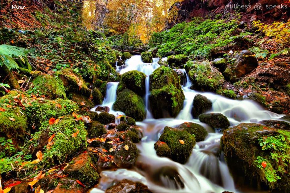 holy alive amidon autumn spring