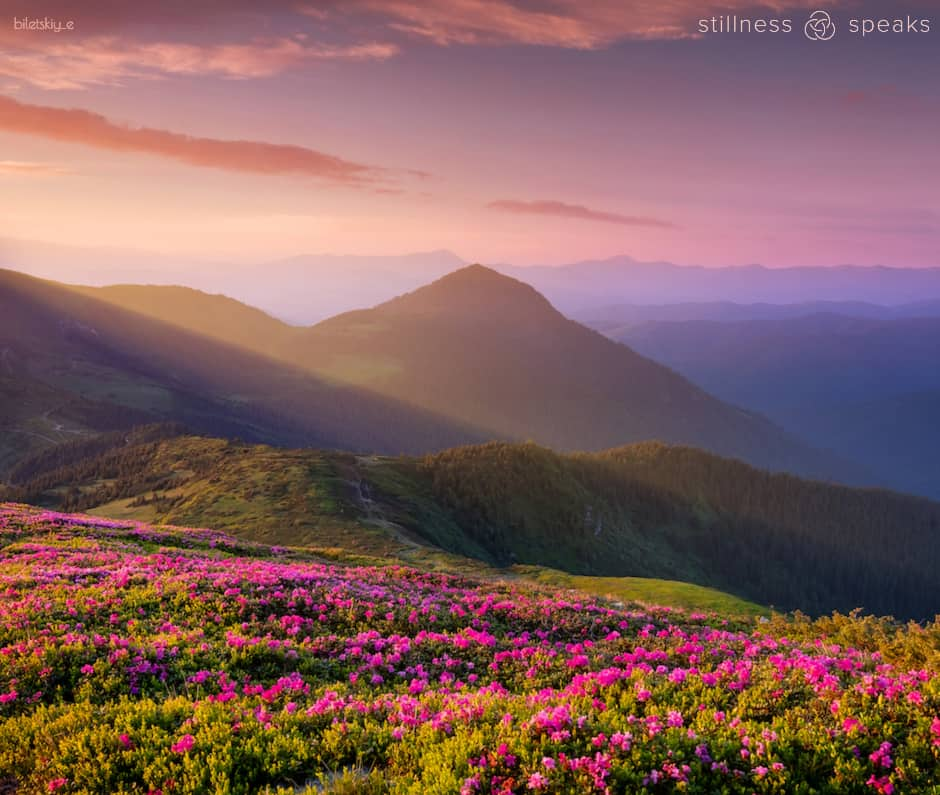 silence flowers merton